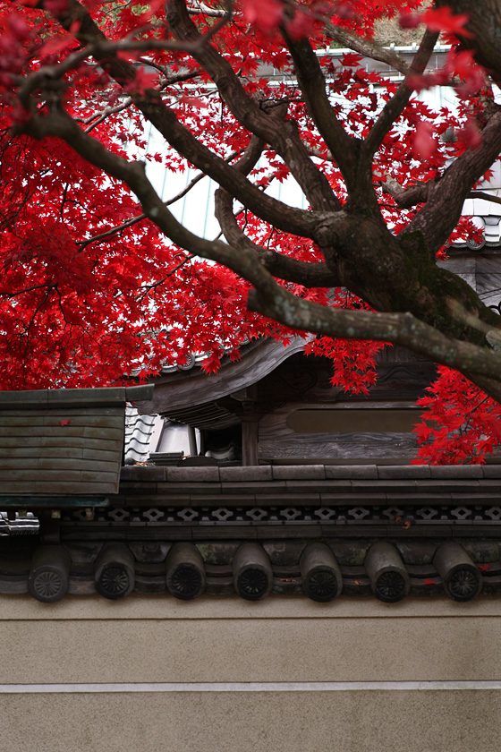 根香寺(香川県高松市中山町)の紅葉