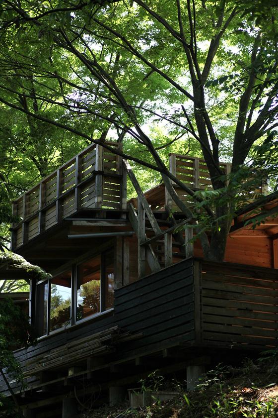 森から屋上テラスを見る